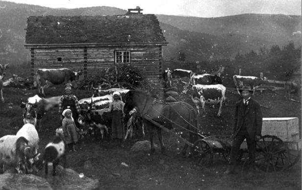 anne kleppo einset 1920-30 grøvo hol bygdearkiv